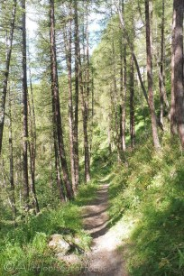 17-path-through-the-woods