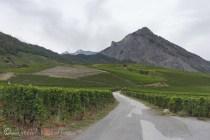 3-vineyards
