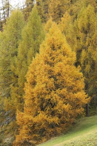 10-autumn-colours