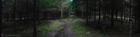 18-in-the-woods