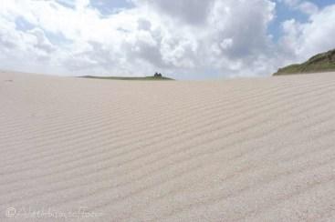 16 Dune