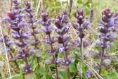 16 Wild flowers