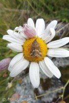 6 Unidentified moth