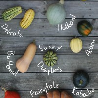 Types of Fall Squash (and How to Use Them)