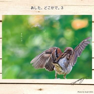 綺麗な羽ですね