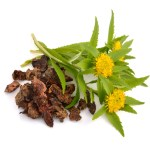 Rhodiola (King's Crown) (root)