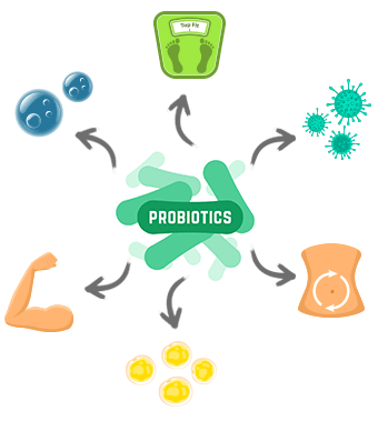 Lactobacillus Gasseri - the Weight Loss Probiotic? | Alivebynature