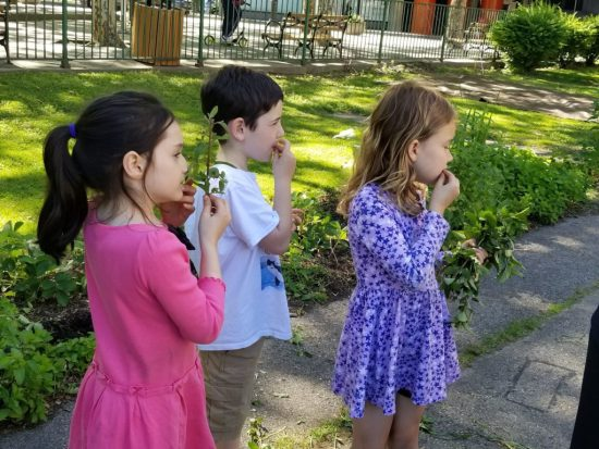 Learning about plants at RI Living Library & Think Park