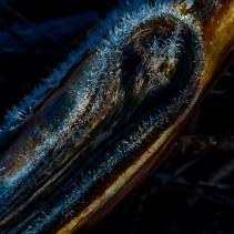 Crystallised twig