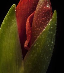 Detail of Two buds 25/01/26