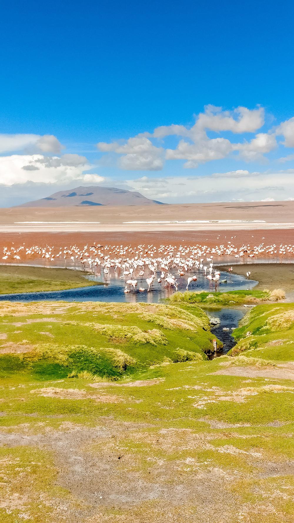 Laguna Colorada with llamas and flamingos - How to pick the best Uyuni Salt Flats tour to Bolivia? | Aliz's Wonderland