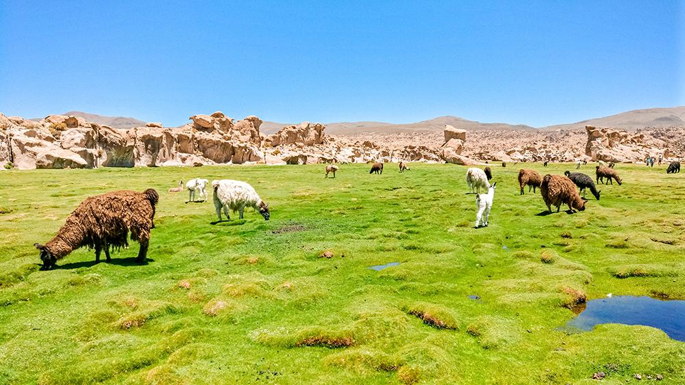 Katal Canyon and Laguna Negra and llamas - How to pick the best Uyuni Salt Flats tour to Bolivia? | Aliz's Wonderland