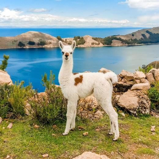 A day trip to Isla del Sol, Bolivia   Aliz's Wonderland