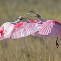 2016 Audubon Photography Awards