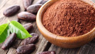 Photo of دراسة أمريكية تكشف أن الكاكاو يعالج السمنة