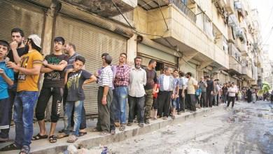 """Photo of رئيس مجلس مدينة حلب يحث المواطنين على """"العناية بالقطط"""""""