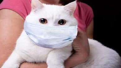 Photo of روسيا تبدأ بتطعيم الحيوانات ضد كورونا
