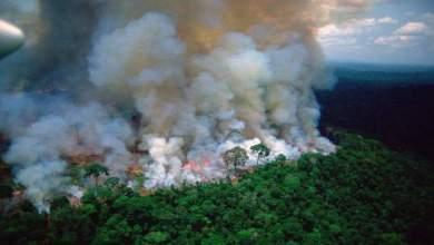 """Photo of 2.5 مليار شجرة ماتت في """"الأمازون"""""""