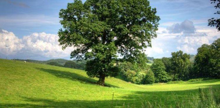 """""""الان"""" تعبير عن الشجرة للسنة الثالثة ابتدائي"""