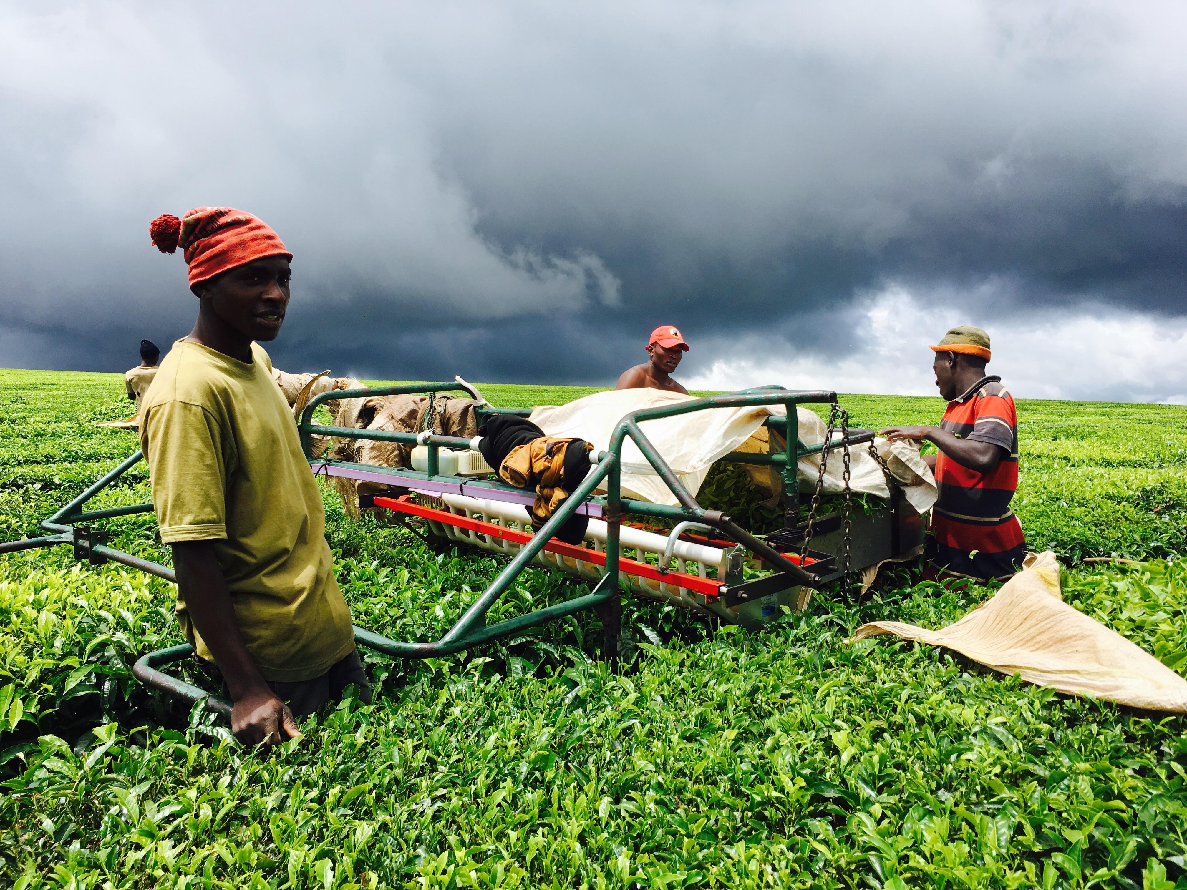 """タンザニアの人々にとって、""""働く""""とは 〜あなたは何のためにお金を稼ぎますか?〜"""