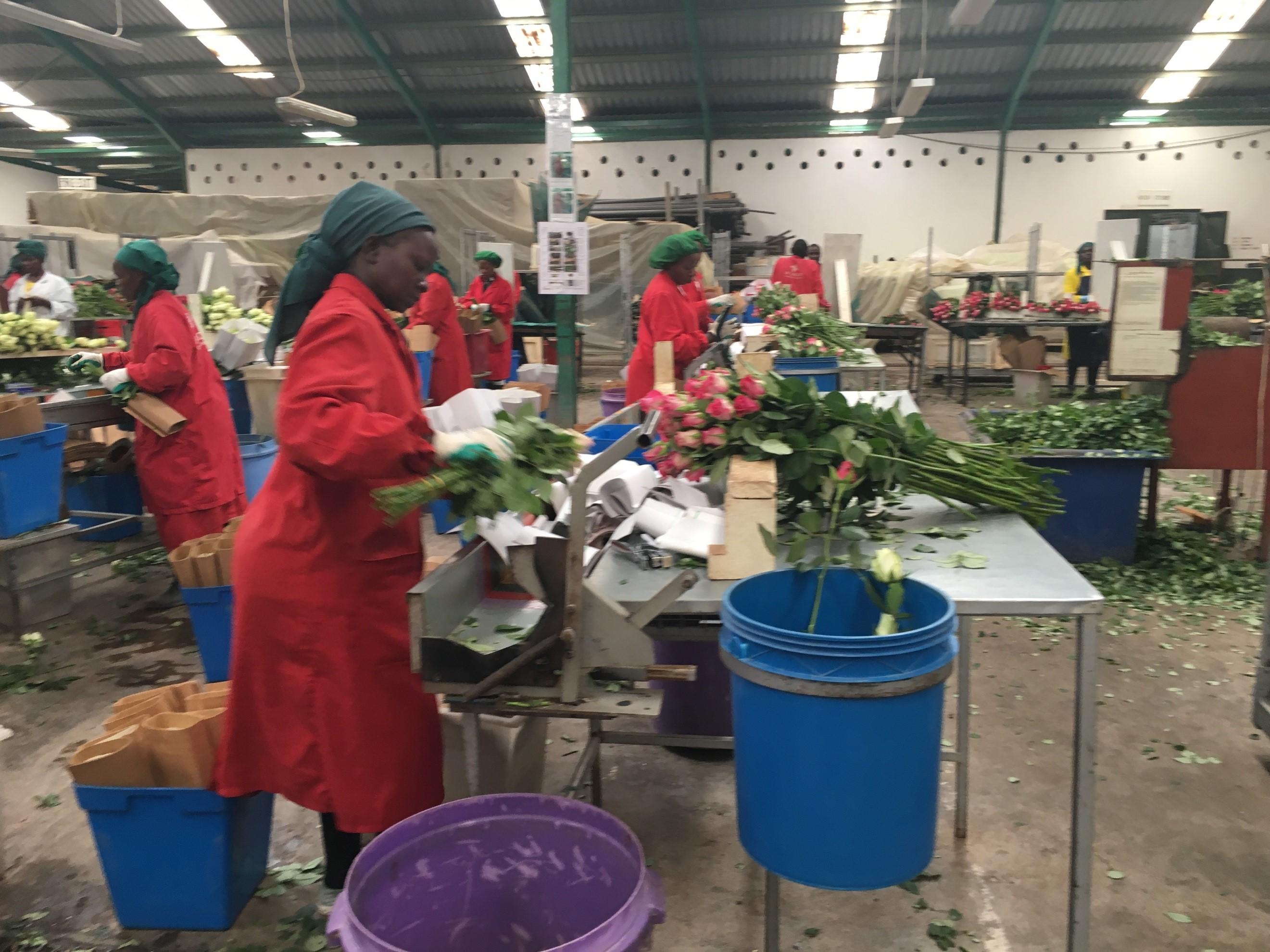 ケニアからバラを輸入する方法!基本の7項目を大公開