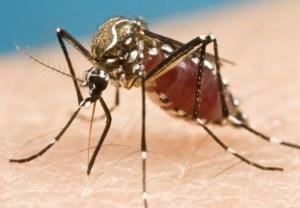 無題 mosquito blog 20160425