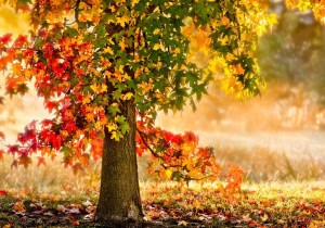 tree-yellow-red