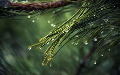סוף שבוע סגרירי: גשמים בצפון ועלייה קלה בטמפטורות