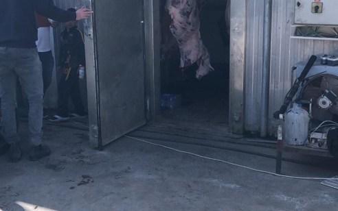 כפר מנדא: נתפס באטליז כ-5 טון בשר שאינו ראוי למאכל אדם