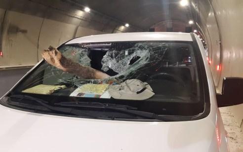 נהג רכב בן 42 נפצע בינוני מגזע עץ שעף ממשאית חולפת סמוך למנהרות יקנעם