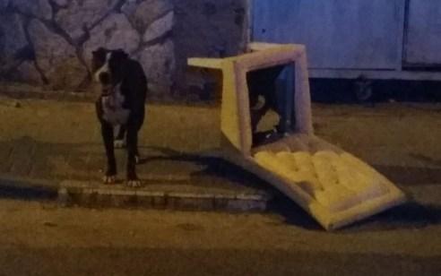 תושב ג'אסר א זרקא נעצר בחשד ששיסה את כלבו בשכניו ודקר אותם