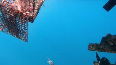 היחידה הימית באילת איתרה זוג מלכודות דיג נטושות המהוות מפגע לדגים