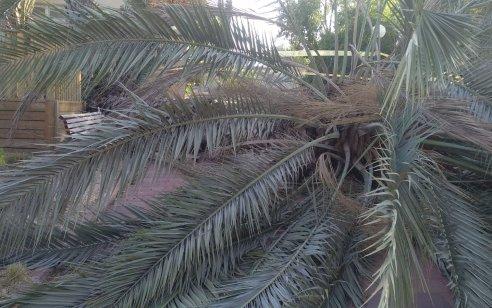 """קק""""ל מבקשת להימנע מלהגיע ליערות בימים הקרובים עקב חשש מקריסת ענפים"""