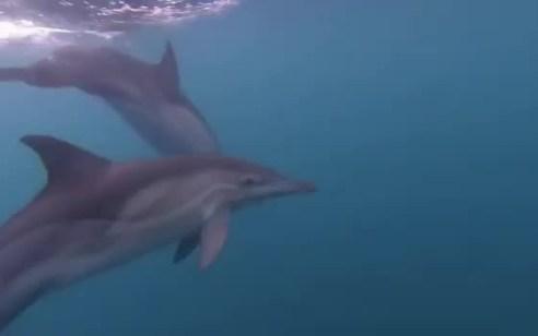 תיעוד מיוחד מתחת למים: להקת דולפינים נדירים נצפו סמוך לחופי אשקלון
