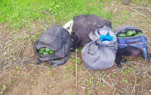 """נעצרו 2 ערבים מג'נין שגנבו תוצרת חקלאית במשקל 142 ק""""ג מהמטעים של יישוב דגניה א'"""