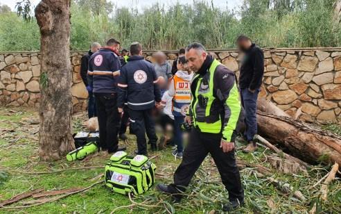 פועל בן 21 נפצע מעץ שנפל במהלך עבודת גיזום בנהריה – מצבו בינוני