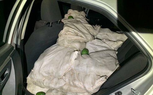"""לאחר מרדף רכוב נעצרו 2 חשודים בגניבת אבוקדו במשקל של כ-385 ק""""ג מהמטעים שבקיבוץ עין החורש"""
