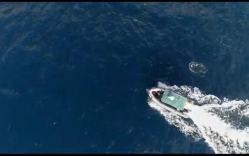 צפו: תיעוד מלהיב של להקת דולפינים מלווה הפלגה של היחידה הימית ברשות הטבע והגנים