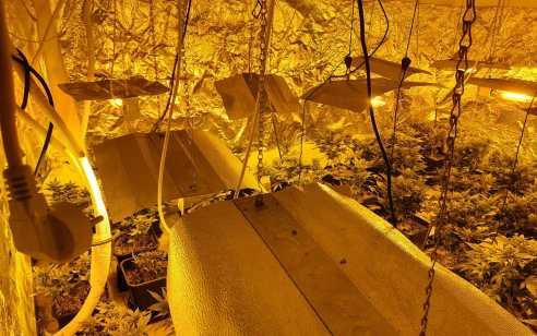 המשטרה עצרה בבני ברק חשוד בהפעלת מעבדת סמים עם מעל 150 שתילי קנאביס