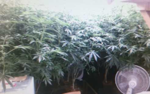 בעקבות צעקות מדירה: תושב חריש נעצר בחשד לגידול סמים בביתו