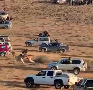 צפו: עשרות רכבים דוהרים במהלך מרוץ גמלים בנגב ומסכנים חיים