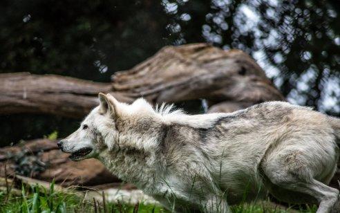 בואו נבחר להאכיל את הזאב הנכון // הטור השבועי // אינג' אורן אדר