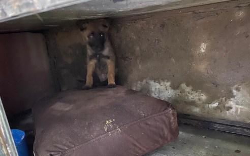 תושב ג'סר א זרקא נעצר בחשד להחזקת סמים, נשק וגור כלבים שהוחזק בתת תנאים