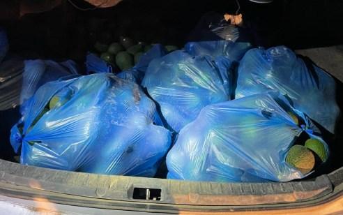 """לאחר מרדף רכוב ורגלי: 2 בדואים נעצרו כשברכבם מאות ק""""ג אבוקדו שנגנבו ממטעים בנגב"""