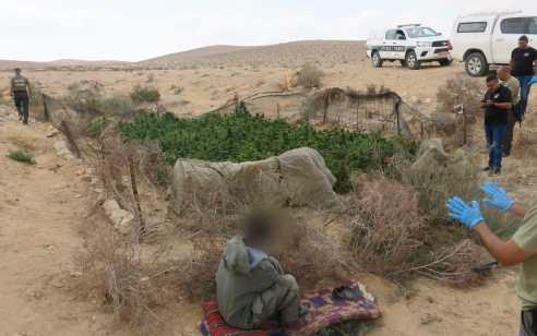חממת סמים עם 1580 שתילים  אותרה בדרום הארץ – קטין תושב ביר הדאג' שנמצא בחממה נעצר