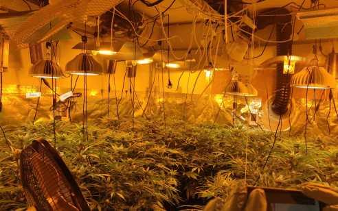 מעבדה עם מאות שתילי מריחואנה נחשפה בפתח תקווה – שני חשודים נעצרו