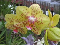 Speckled orchid, and notice the greyish colored one beneath