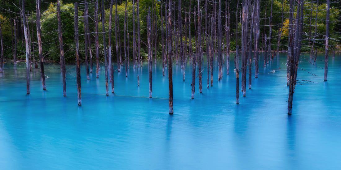 The Blue Pond ταπετσαρία Ιαπωνία