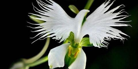 Απίστευτα και όμορφα λουλούδια που δεν μοιάζουν με λουλούδια allabout.gr