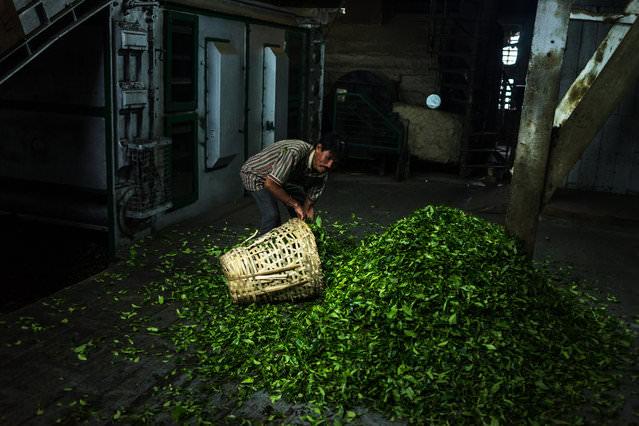 mahabi Το ακριβότερο τσάι στον κόσμο allabout.gr